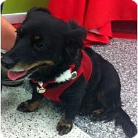 Adopt A Pet :: Roxie - Oceanside, CA