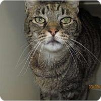 Adopt A Pet :: Chadwin - Richfield, OH