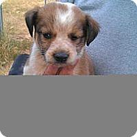 Adopt A Pet :: Shaker - Conway, AR