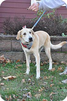 Labrador Retriever/Shepherd (Unknown Type) Mix Dog for adoption in Poughkeepsie, New York - Luke