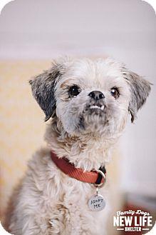Shih Tzu/Lhasa Apso Mix Dog for adoption in Portland, Oregon - Calvin