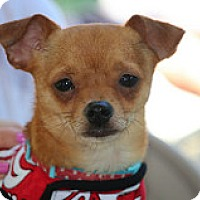 Adopt A Pet :: Ziggy - Fountain Valley, CA