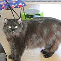 Adopt A Pet :: Smokey - Rawlins, WY