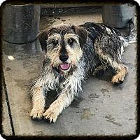 Adopt A Pet :: Lucky - Los Alamitos, CA