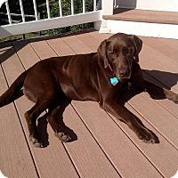 Adopt A Pet :: Helen - Buckeystown, MD
