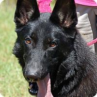 Adopt A Pet :: Marquee AD 08-12-17 - Preston, CT