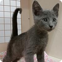 Adopt A Pet :: Mouser - St. Louis, MO