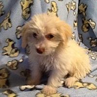 Adopt A Pet :: Hawaii: Kauai - Las Vegas, NV
