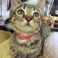 Adopt A Pet :: Libby - Lunenburg, MA