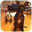 Photo 3 - Pit Bull Terrier Mix Dog for adoption in Framingham, Massachusetts - Annabelle