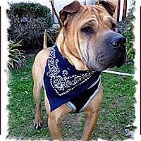 Adopt A Pet :: Khan - Houston, TX