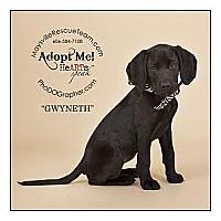 Adopt A Pet :: Gwyneth - Louisville, KY