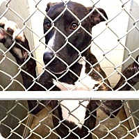 Adopt A Pet :: Brooklyn - ADOPTED! - Zanesville, OH