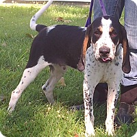 Adopt A Pet :: Blue - Metamora, IN