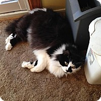 Adopt A Pet :: Happy - Mellow Fellow - Rochester, NY