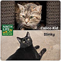 Adopt A Pet :: Calico Kid & Slinky - Oakville, ON