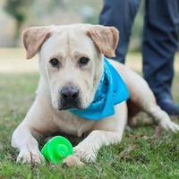 Adopt A Pet :: Levi - Lafayette, LA