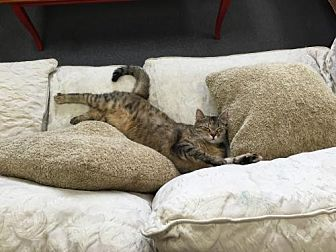 Domestic Mediumhair Cat for adoption in Ellicott City, Maryland - Ruby (Slippers)