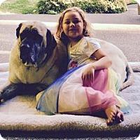 Adopt A Pet :: Kona - Yakima, WA