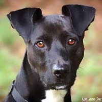Adopt A Pet :: Jon Snow - Barnesville, GA
