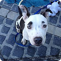 Adopt A Pet :: Groucho - Los Angeles, CA