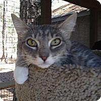 Adopt A Pet :: Laney - Monroe, GA