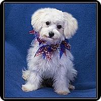 Adopt A Pet :: Mariah - Ft. Bragg, CA