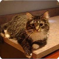 Adopt A Pet :: Gil--PETSMART - Muncie, IN