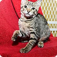 Adopt A Pet :: Cindy - New York, NY