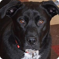 Adopt A Pet :: Duncan - Hamburg, PA