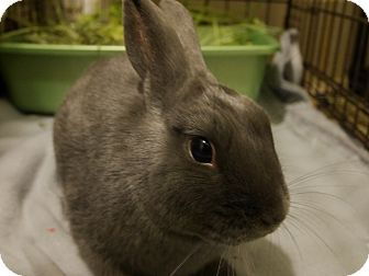 Other/Unknown Mix for adoption in Oak Park, Illinois - Bunfuzzle
