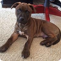 Adopt A Pet :: Walker - Knoxville, TN