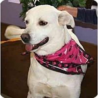 Adopt A Pet :: Lovey - Cumming, GA
