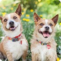 Adopt A Pet :: Bacon - Van Nuys, CA