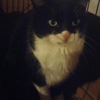 Adopt A Pet :: Bandit (& Gizmo) - Herndon, VA