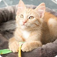 Adopt A Pet :: Finnegan - Chicago, IL
