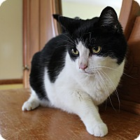 Adopt A Pet :: Sam - Middletown, NY