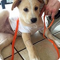 Adopt A Pet :: Boots - BIRMINGHAM, AL