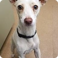 Adopt A Pet :: Ace #168423 - Apple Valley, CA
