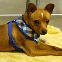 Adopt A Pet :: ROVER - Auburn, CA