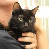 Adopt A Pet :: Raksha - Brunswick, GA