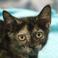 Adopt A Pet :: Pita - Austin, TX