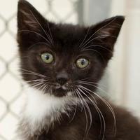 Adopt A Pet :: Elijah - Greenwood, SC