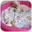 Photo 4 - Bichon Frise Mix Puppy for adoption in La Costa, California - Casper