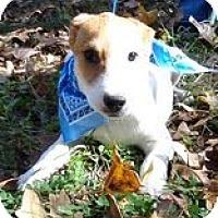 Adopt A Pet :: Tbone ($50.00 off) - Brattleboro, VT