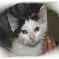 Adopt A Pet :: Johnny - Montgomery, IL