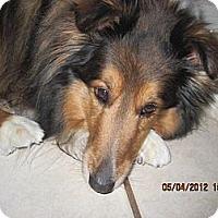Adopt A Pet :: Lacy - apache junction, AZ