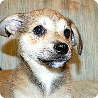 Adopt A Pet :: Byrom - Niceville, FL