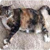 Adopt A Pet :: Trixie - KANSAS, MO