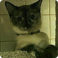 Adopt A Pet :: Veda - white settlment, TX